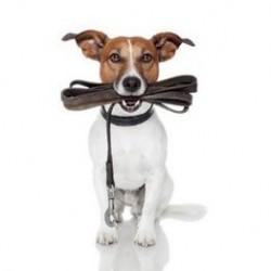 Collars, Harnesses & Leads